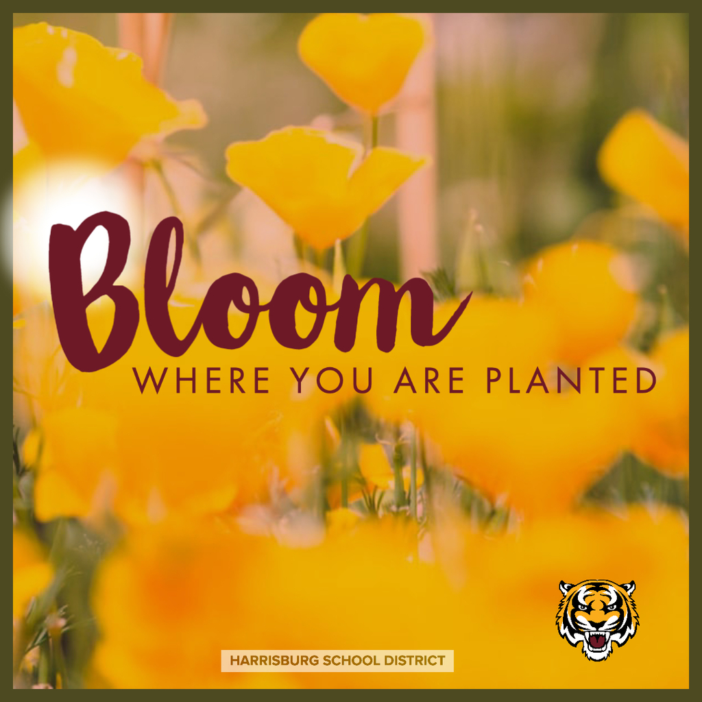 BLOOM WHERE YOURE PLANTED
